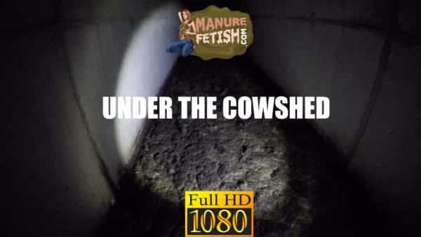 under the cowshed